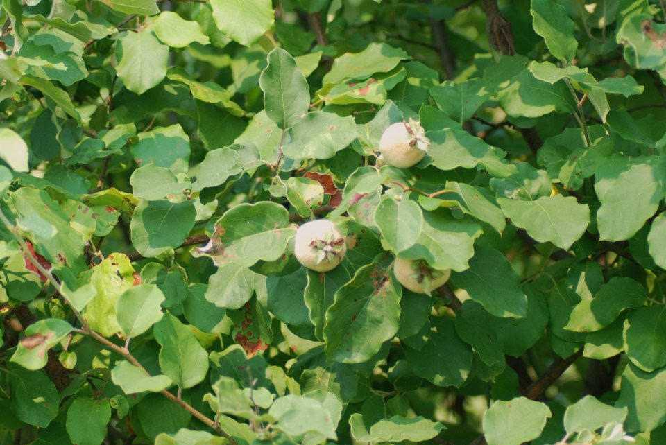Dry Fruit (10)
