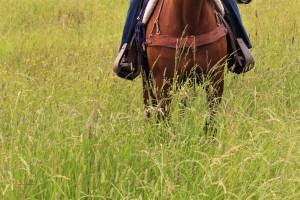 horse-belly-deep-grass-2
