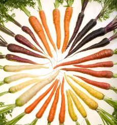 Carrots_of_many_colors_cutout