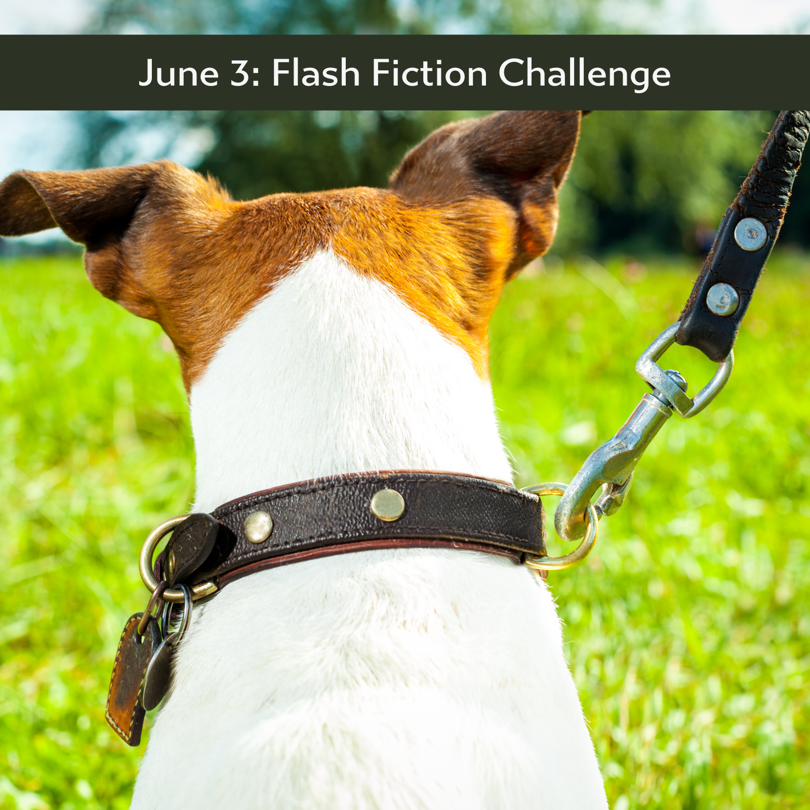 Leashed flash fiction prompt